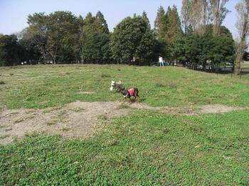 2009.10.18水元公園dogrun1.jpg