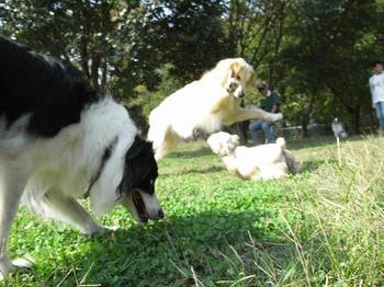 2009.10.18水元公園dogrun12.jpg