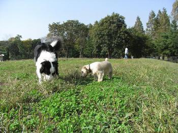 2009.10.18水元公園dogrun3.jpg