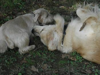 2009.10.18水元公園dogrun4.jpg