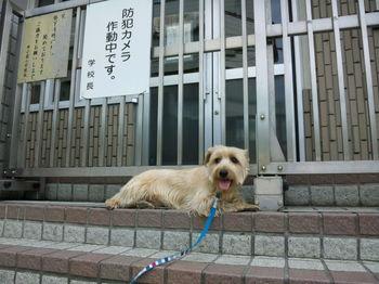 2010.6.6_防犯カメラ作動中.jpg