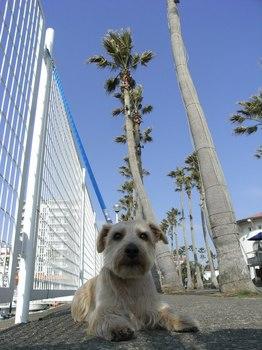 20100321_逗子マリーナ.jpg