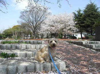 20100411_運動公園2.jpg