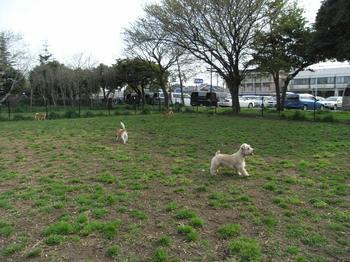 20100418_DOG RUN篠崎公園2.jpg