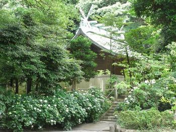 20100613_鎌倉宮あじさい祭り1.jpg
