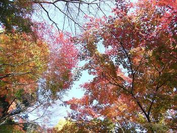 20101128鎌倉長谷寺.jpg