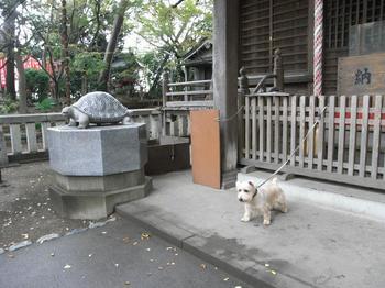 亀ヶ岡八幡宮_2009.10.25-1.jpg