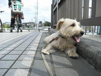 八剱橋2009.10.12.jpg