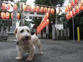 秋祭り 2009.10.3.jpg