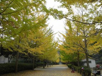 銀杏並木20101114-2.jpg