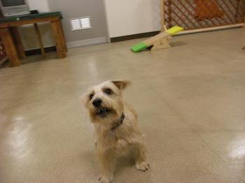 petia dog run 2009.11.1.jpg