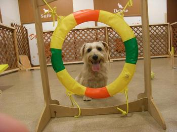 petia dog run 2009.11.1.-1.jpg