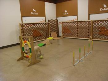 petia dog run 2009.11.1.-2.jpg