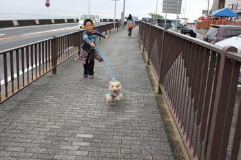 pippin20101010.jpg